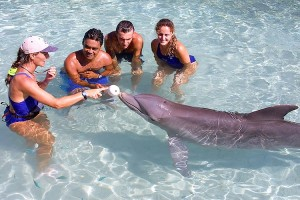 Moorea Dolphinquest