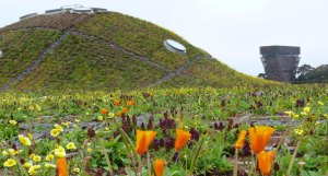 Golden Gate Park - California Academy of Science Living Roof