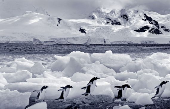 Just a few little penguins chillin' in Antarctica...