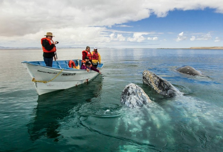 A little whale watching up close for the adventurer in you...