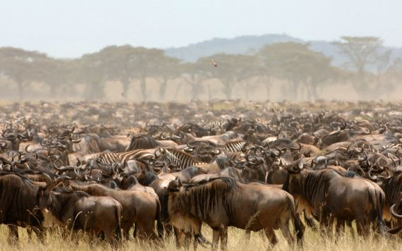 kenya-masai-safari-tours-migration